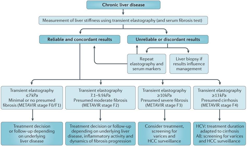 diagnostic algorithm for interpreting transient elastography measurement results in liver disease